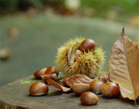 秋には栗やどんぐり拾いを楽しみながら♪
