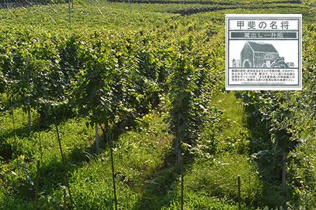1891年設立の日本最古のワイナリーから