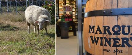 羊とワイン樽