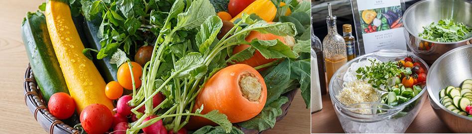 新鮮!愛知県産野菜