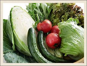 岡山産の新鮮サラダ。