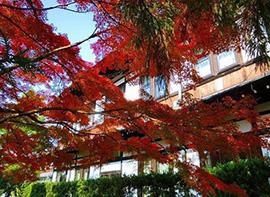【朝食FREE】想いで奈良 〜春の大人旅行〜【選べる朝食、選べる特典付】