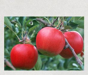 協和のりんご直売所