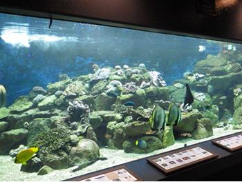 京都大学水族館