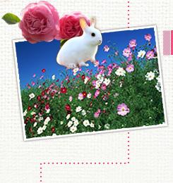 海の中海浜公園で、花と動物にふれ合う